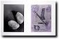Schulterkuss 7, 1988 a. d. Reihe 12 Schulterküsse, 1988; Bromsilbergelatine, Belichtungsmontage (2 Kamera-Negative) (li.), Cliché-verre, aquarelliert (re.)